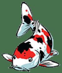 Рыба  и аксессуары