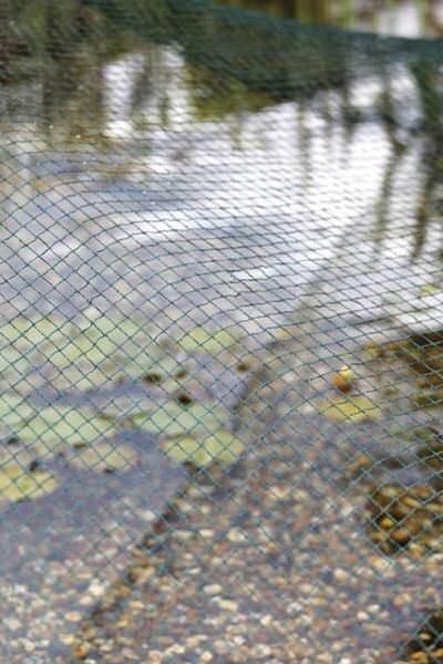 сетка на зеркало воды oase aquanet 2, 4 x 8 м Oase (Германия) аксессуары по уходу за прудом